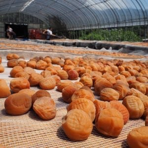 Umeboshi is Pickled Plum preservrd food
