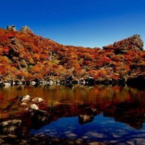 Fall Leaves at Mt. Taisenzan