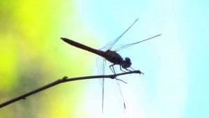 photo 2 - dragon fly