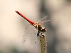 photo 3 - dragon fly