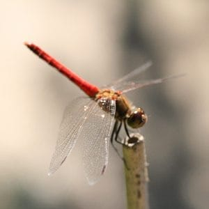 close to Kumano-kodo Akitzuno means dragon fly blessed town.