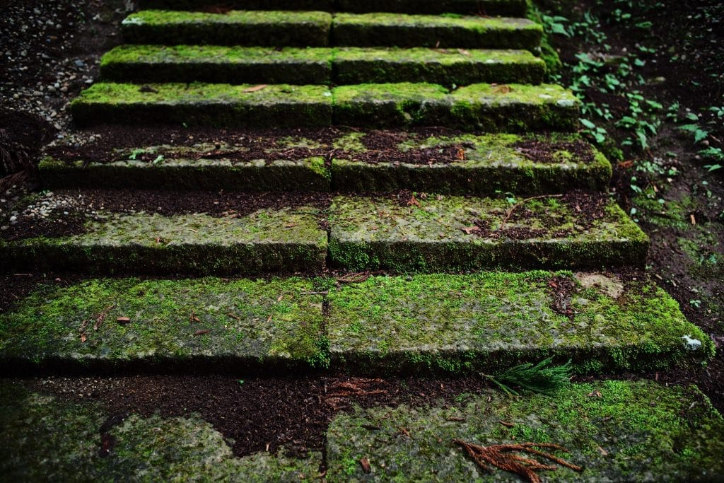 Green moss above stone steps