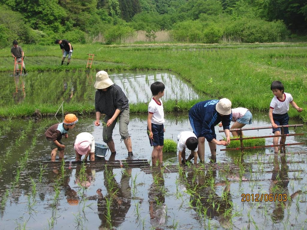 School in the rice paddy