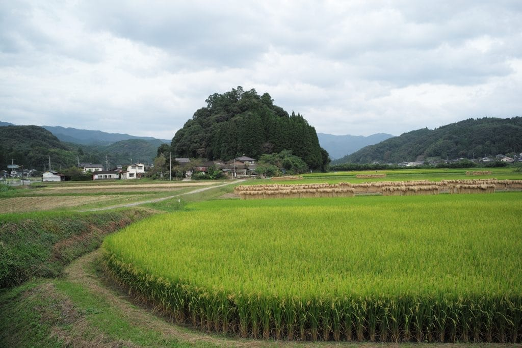 Amemiya shrine is in the rice paddy