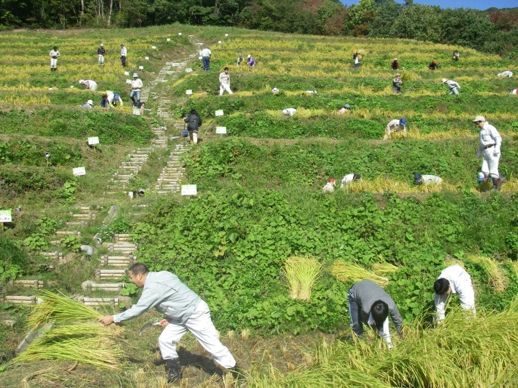 Farmers working in Terraced Rice paddy